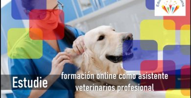 asistente veterinario